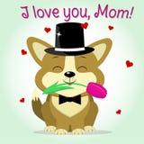 Il Corgi del cucciolo tiene un tulipano rosa, stile del fumetto Congratulazioni Giorno felice del `s della madre Fotografia Stock