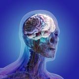 Il corpo umano (organi) dai raggi x su fondo blu illustrazione vettoriale
