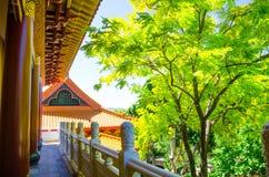 Il corridoio con gli alberi verdi di Nan Tien Temple, Berkeley, Nuovo Galles del Sud Immagini Stock