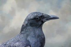 Il corvo Fotografia Stock