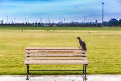 Il corvo alla banca Immagine Stock