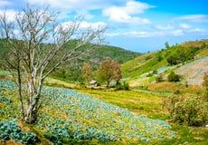 Il cottage dell'agricoltore su una collina Fotografia Stock Libera da Diritti