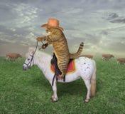Il cowboy del gatto pasce le sue mucche immagine stock libera da diritti