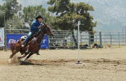 Il cowboy del rodeo fa concorrenza su un cavallo veloce Immagini Stock
