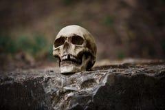 Il cranio di un uomo su una grande lastra di pietra grigia immagine stock libera da diritti
