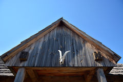 Il cranio di una mucca del Texas è sopra un'entrata fotografia stock libera da diritti