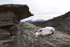 Il cranio di una mucca si trova su un fungo di pietra ad un'altitudine di 3200 metri di nonte Elbrus fotografia stock