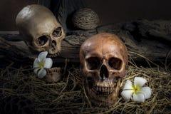 Il cranio umano delle coppie di natura morta con la plumeria fiorisce e rivolta il fieno Immagine Stock