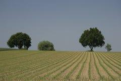 il cropland del cereale si è svasato Fotografie Stock Libere da Diritti