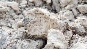 Il cubo dell'argilla Fotografia Stock