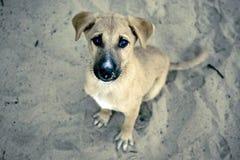 Il cucciolo è attendente e sedentesi sulla sabbia. Immagine Stock
