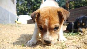 Il cucciolo fotografia stock libera da diritti