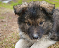 Il cucciolo. Immagine Stock