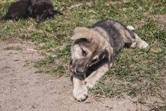 Il cucciolo fotografia stock