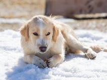Il cucciolo con caffè ed il latte ricoprono sgranocchiare nella neve Immagini Stock