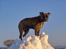 Il cucciolo del cane sul cumulo di neve della neve Fotografia Stock Libera da Diritti