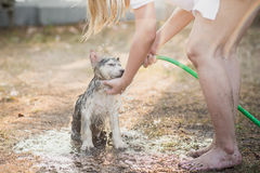 Il cucciolo del husky siberiano scuote l'acqua fuori dal suo cappotto fotografia stock