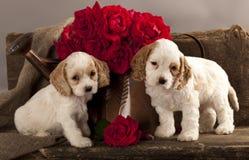 Il cucciolo ed il fiore dello Spaniel di Cocker sono aumentato Immagini Stock Libere da Diritti