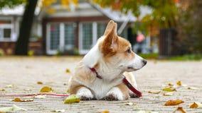 Il cucciolo gioca all'aperto fotografia stock libera da diritti