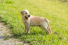 Il cucciolo guarda dietro lui Immagine Stock Libera da Diritti