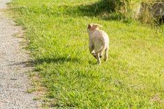 Il cucciolo impertinente fugge Fotografia Stock Libera da Diritti