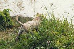 Il cucciolo passa l'erba lunga Immagine Stock Libera da Diritti