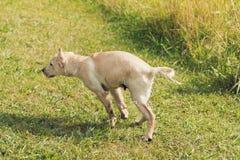 Il cucciolo scuote l'acqua fuori Immagine Stock