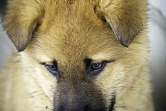 Il cucciolo si siede dalla parete immagini stock