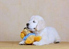 Il cucciolo sveglio del documentalista si trova con il vostro giocattolo favorito Fotografia Stock