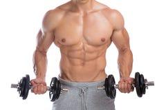 Il culturismo del culturista muscles il corpo di addestramento del bicipite delle teste di legno Fotografia Stock Libera da Diritti