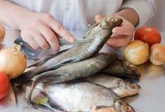 Il cuoco pulisce un pesce Fotografia Stock