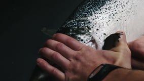 Il cuoco unico elimina le ossa dal raccordo di color salmone, tagliente il pesce sulle fette per la cottura dei sushi nella risol stock footage