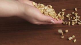 Il cuoco versa i dadi sulla tavola, primo piano dell'arachide stock footage