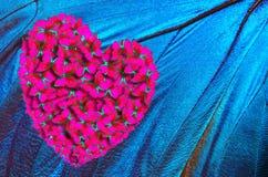 Il cuore è un simbolo di amore Farfalle di Morpho La farfalla traversa il morpho volando immagine stock libera da diritti