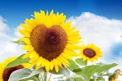 Il cuore del sole Fotografie Stock Libere da Diritti