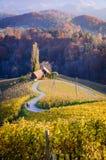 Il cuore della Slovenia Immagini Stock