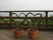 Il cuore due ha modellato le viti in vasi di argilla vicino al recinto di legno Fotografia Stock Libera da Diritti
