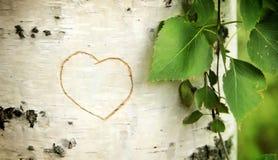Il cuore ha curvato su una betulla Fotografia Stock