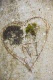 Il cuore ha intagliato su un circuito di collegamento di albero Fotografie Stock