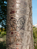 Il cuore ha scolpito in un albero immagine stock libera da diritti