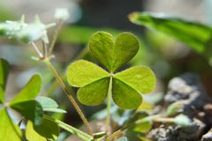 Il cuore verde Fotografia Stock Libera da Diritti