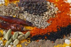 Il curry aromatizza la vista laterale fotografia stock libera da diritti