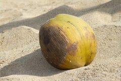 Il dado verde di un Coco si trova sulla sabbia della spiaggia Goa dell'India Fotografia Stock