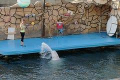 Il dancing nordico del delfino del mare nell'acqua Fotografia Stock
