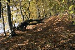 Il Danese Autumn Forest Immagine Stock Libera da Diritti
