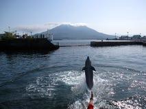Il delfino che salta su davanti all'isola di vulcano Fotografia Stock