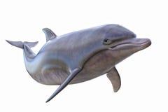 Il delfino ha isolato Immagine Stock Libera da Diritti