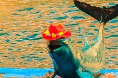 Il delfino sveglio di Irrawaddy (orcaella brevirostris) sta indossando l'arancia fotografia stock