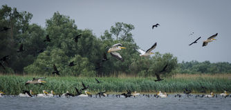 Il delta del Danubio Immagini Stock Libere da Diritti