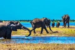 Il delta di Okavango Immagine Stock